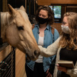 Interior design students petting a horse.
